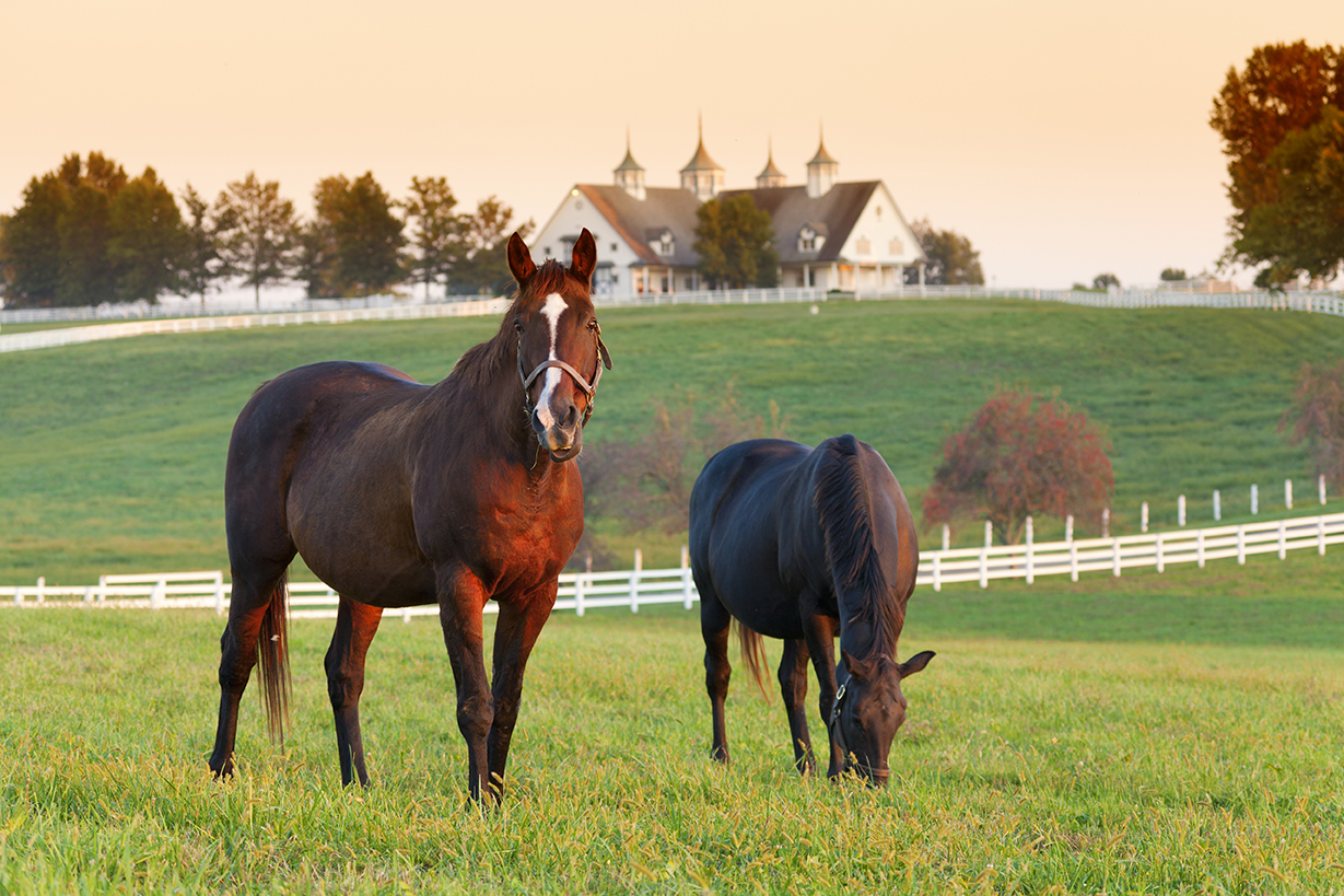 Everything You Need to Know About Buying Equestrian Property