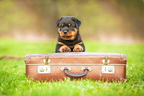 Pet peace: Guide to moving with pets