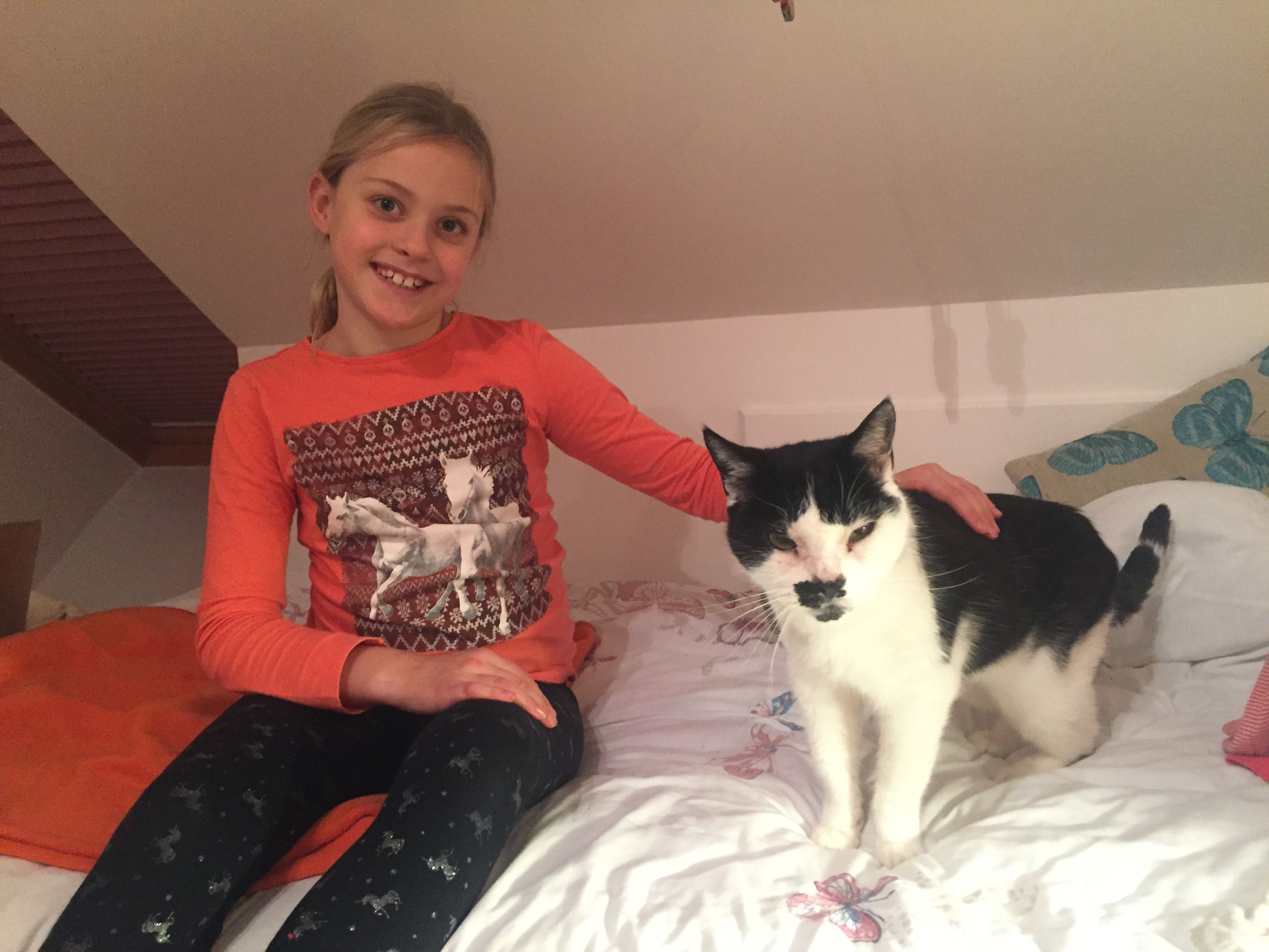 CHARLIE THE CAT HAS A NEW HOME FOR XMAS
