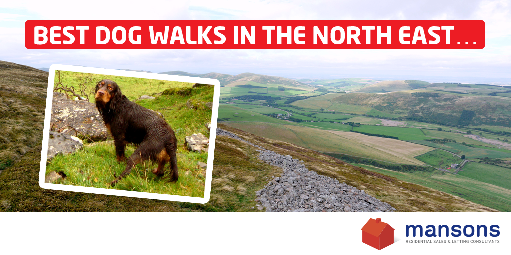 The Best Dog Walks In The North East?