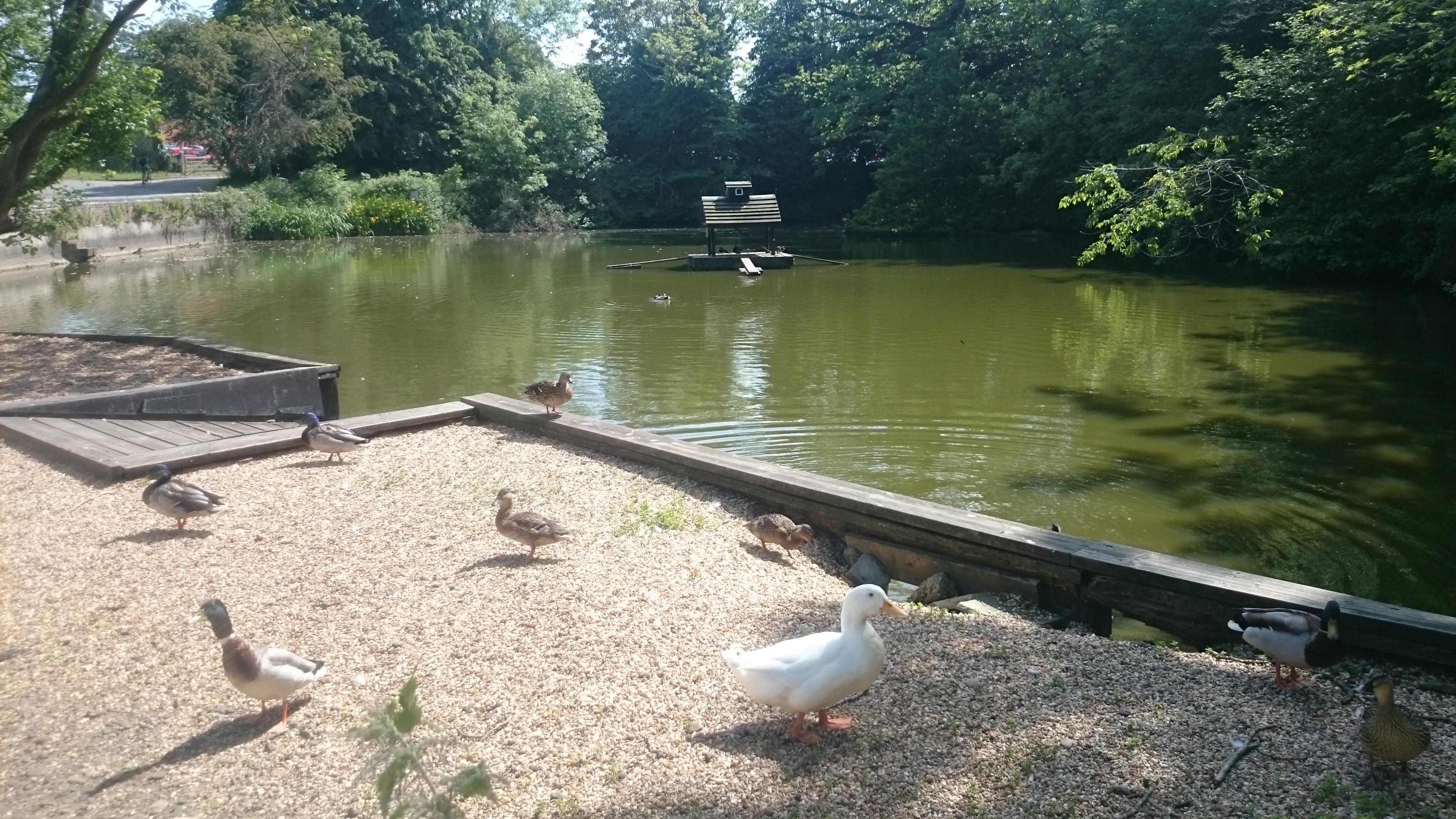 duckingham_palace_(c)_wendy_thomson