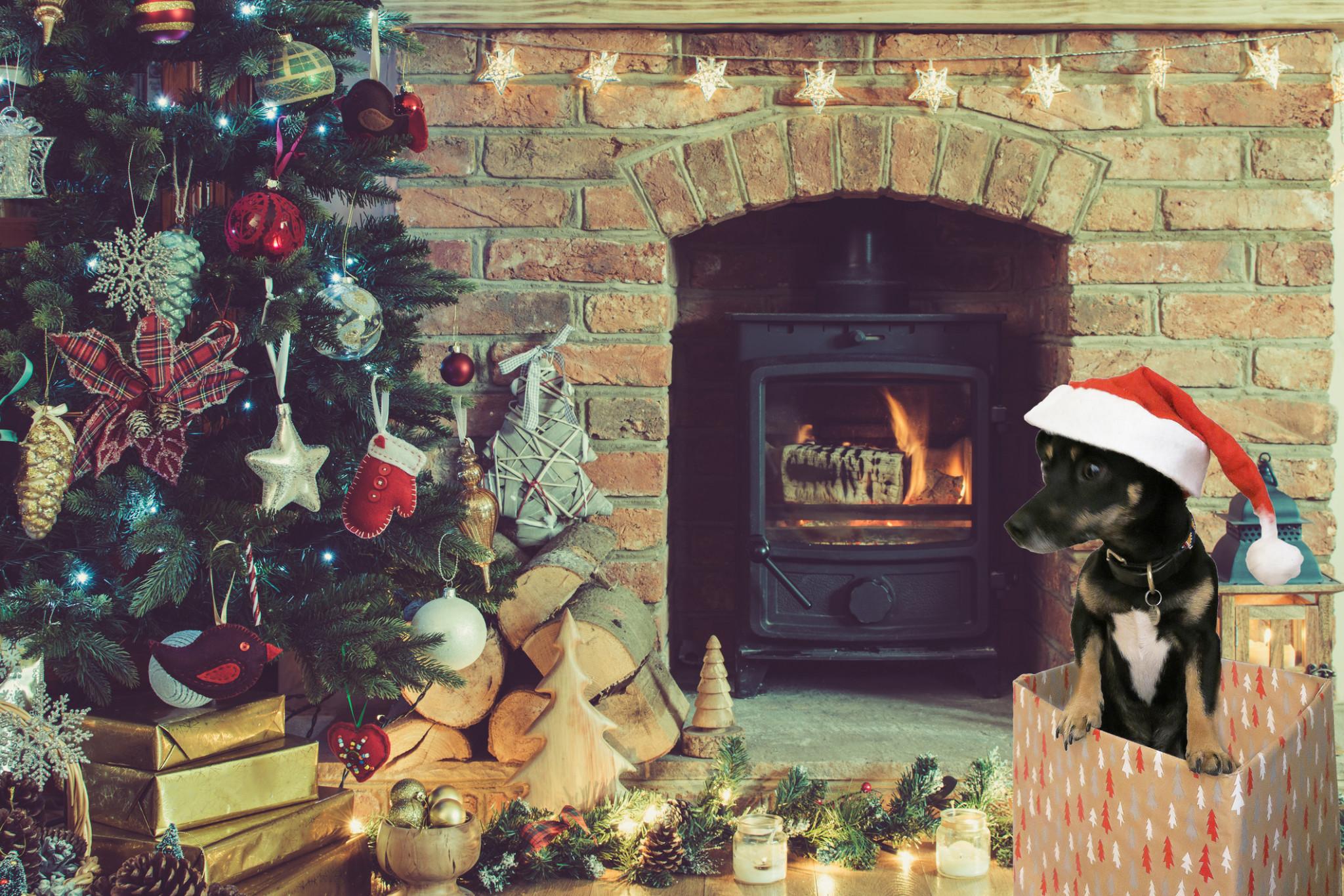 christmas_scene_with_reggie