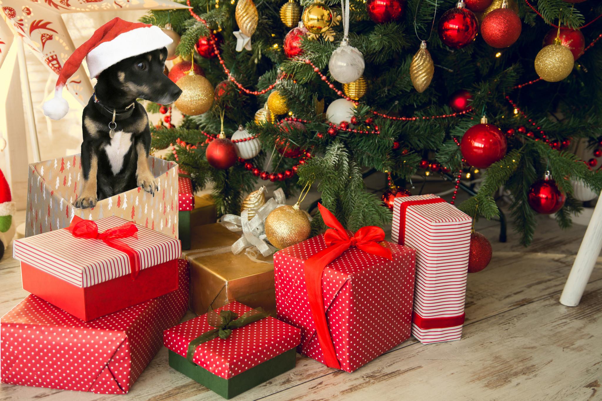 christmas_tree_and_reggie
