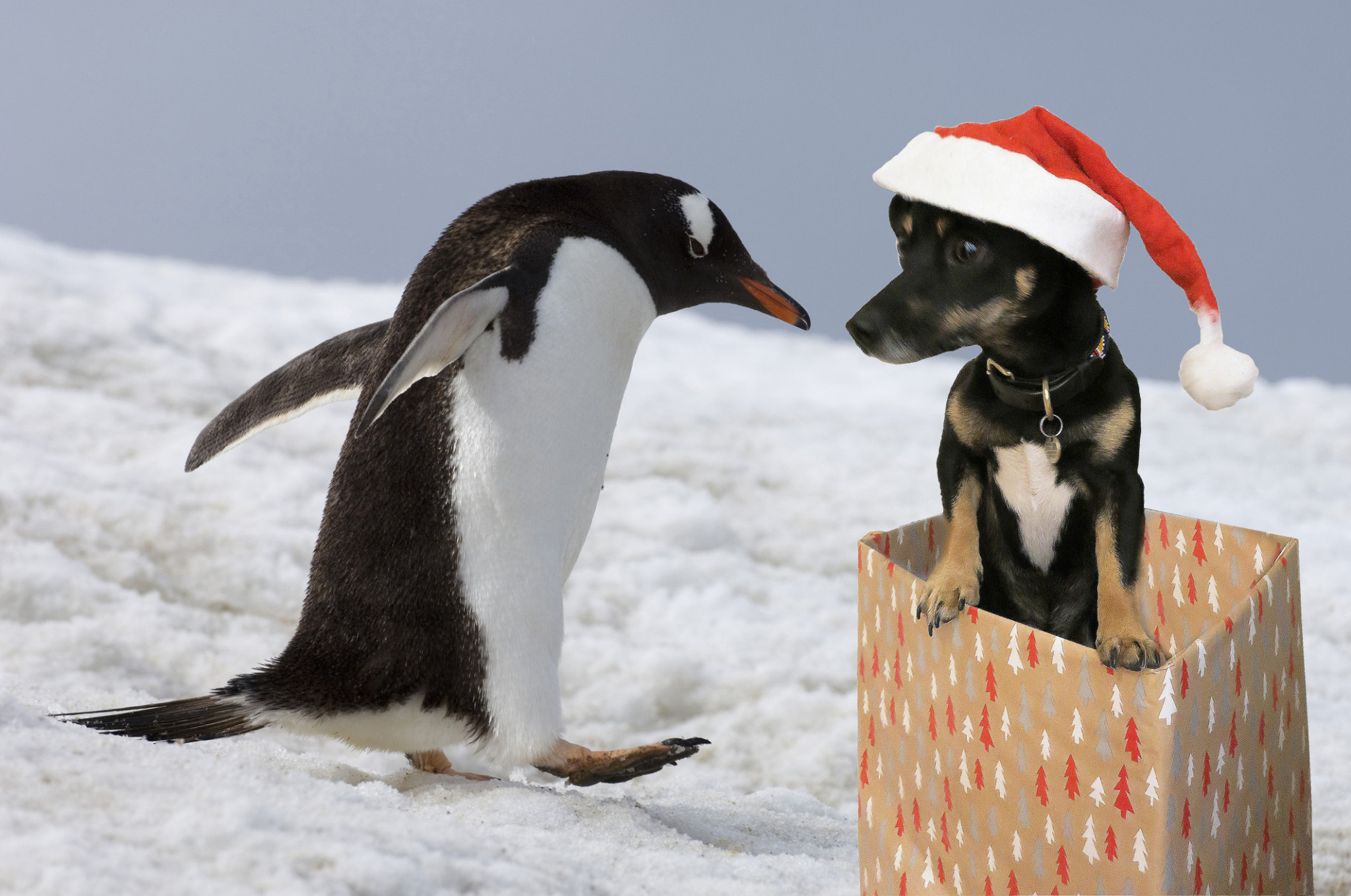 penguin_and_reggie
